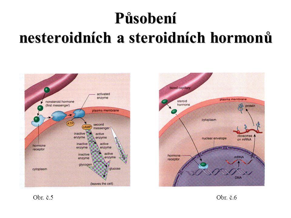 Působení nesteroidních a steroidních hormonů Obr. č.5Obr. č.6