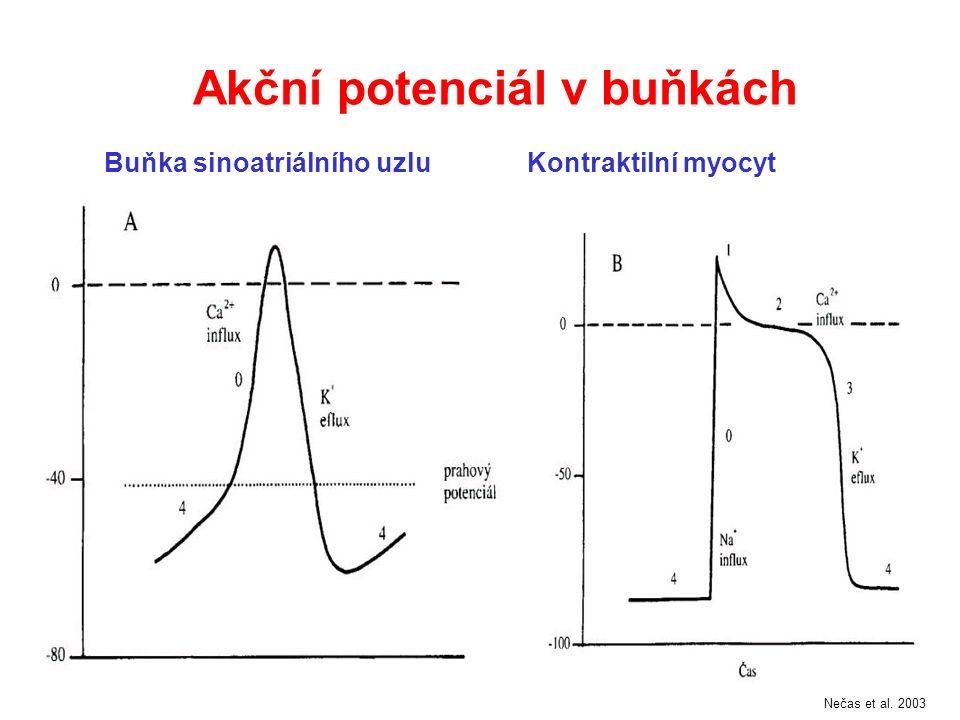 Některé funkce makrofágů důležité pro aterogenezi Změna fenotypu hl.