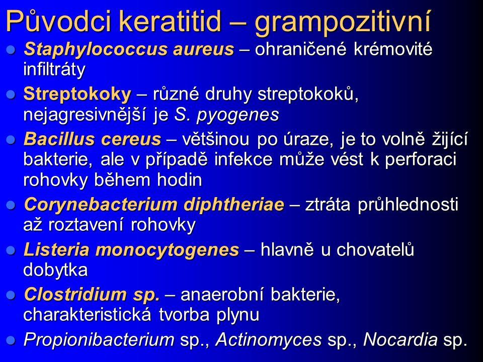 Původci keratitid – grampozitivní Staphylococcus aureus – ohraničené krémovité infiltráty Staphylococcus aureus – ohraničené krémovité infiltráty Streptokoky – různé druhy streptokoků, nejagresivnější je S.
