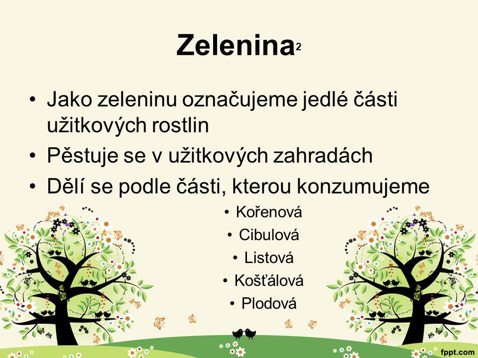 Zelenina 2 Jako zeleninu označujeme jedlé části užitkových rostlin Pěstuje se v užitkových zahradách Dělí se podle části, kterou konzumujeme Kořenová Cibulová Listová Košťálová Plodová