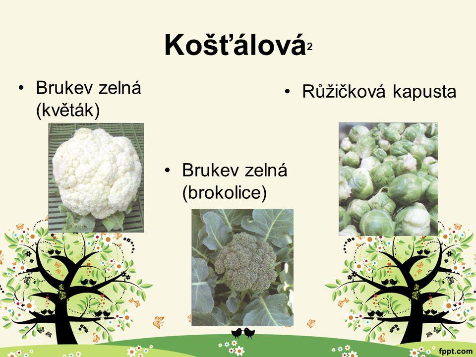 Košťálová 2 Brukev zelná (květák) Brukev zelná (brokolice) Růžičková kapusta