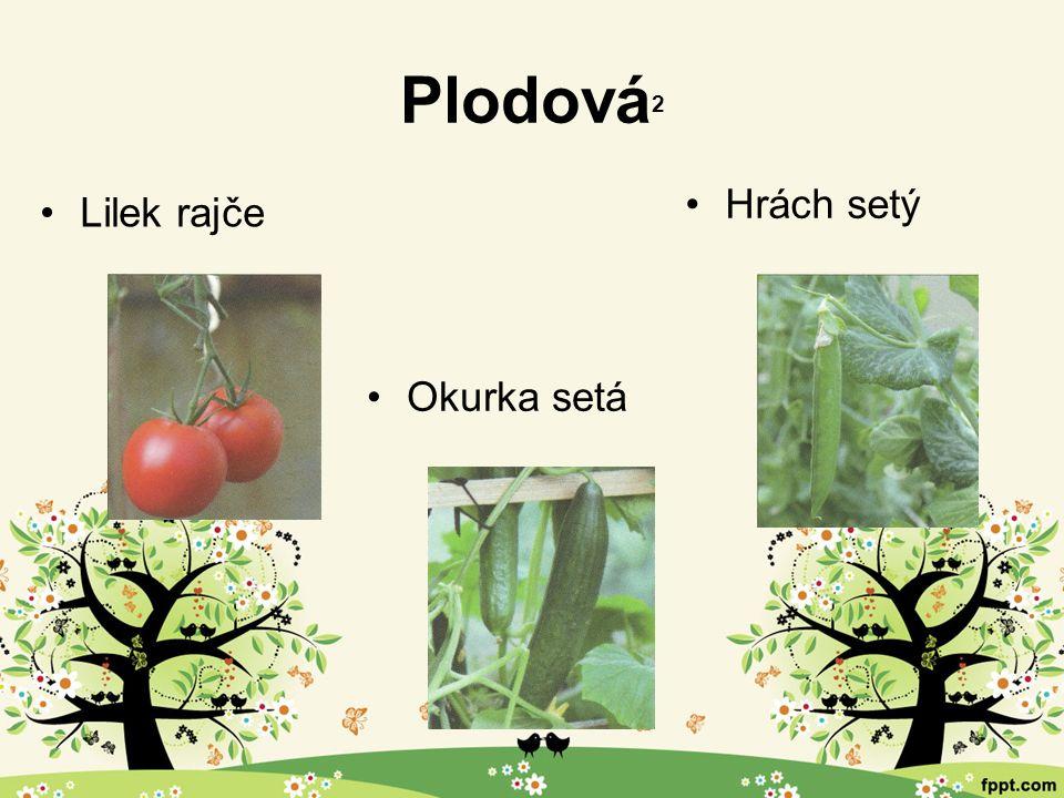 Ekosystém okolí lidských obydlí 2 Rostliny Zahrady a sady slouží k pěstování ovoce, zeleniny a dalších užitkových a okrasných rostlin.