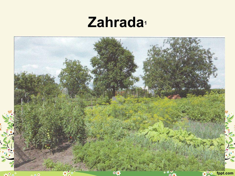 Ovocné stromy 1 Vyšlechtěné z planě rostoucích rostlin Plané rostliny mají malé a trpké plody Šlechtěné odrůdy mají velké a chutné plody »Plody dělíme na malvice, peckovice a bobule