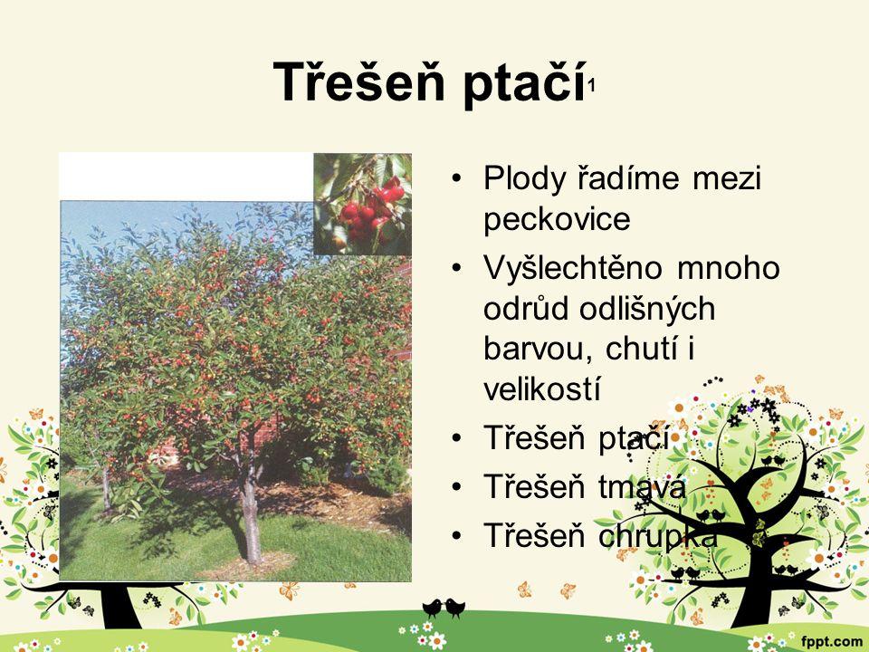 Další ovocné stromy 1 Hrušeň Višeň Švestka Meruňka Broskvoň