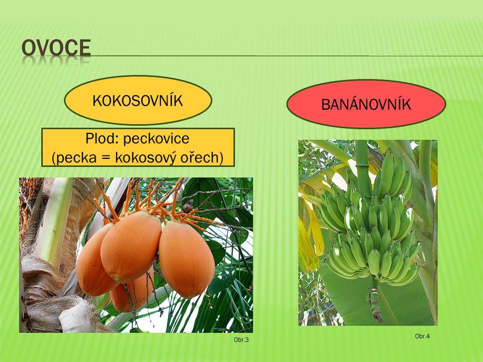 Obr.3 KOKOSOVNÍK BANÁNOVNÍK Obr.4 Plod: peckovice (pecka = kokosový ořech)
