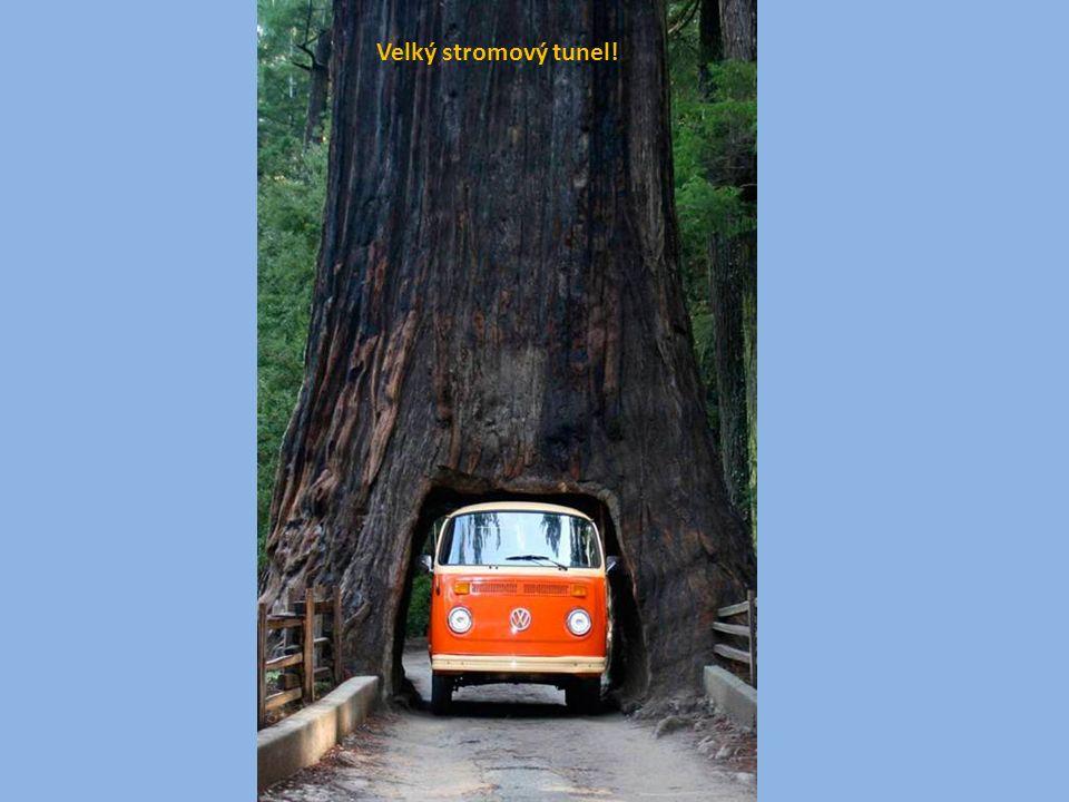 Velký stromový tunel!