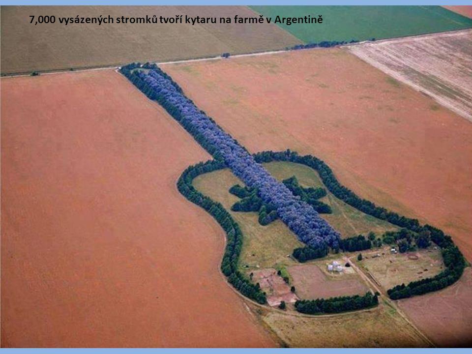 7,000 vysázených stromků tvoří kytaru na farmě v Argentině