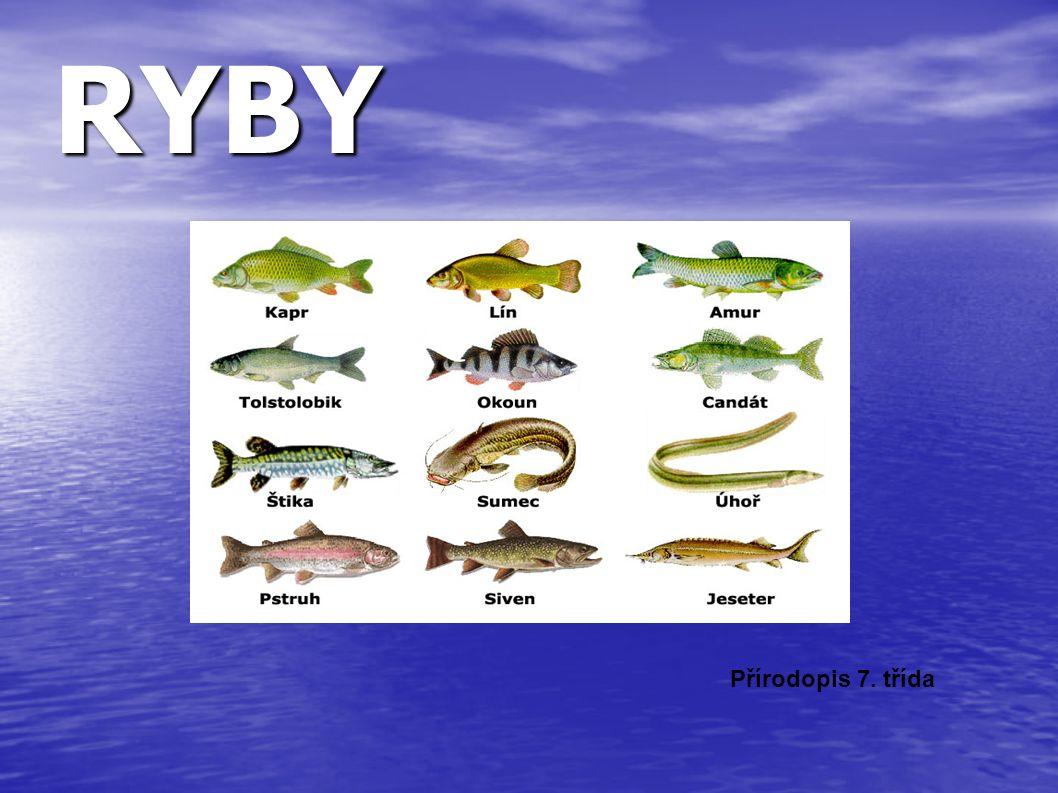 Zástupci mořských ryb