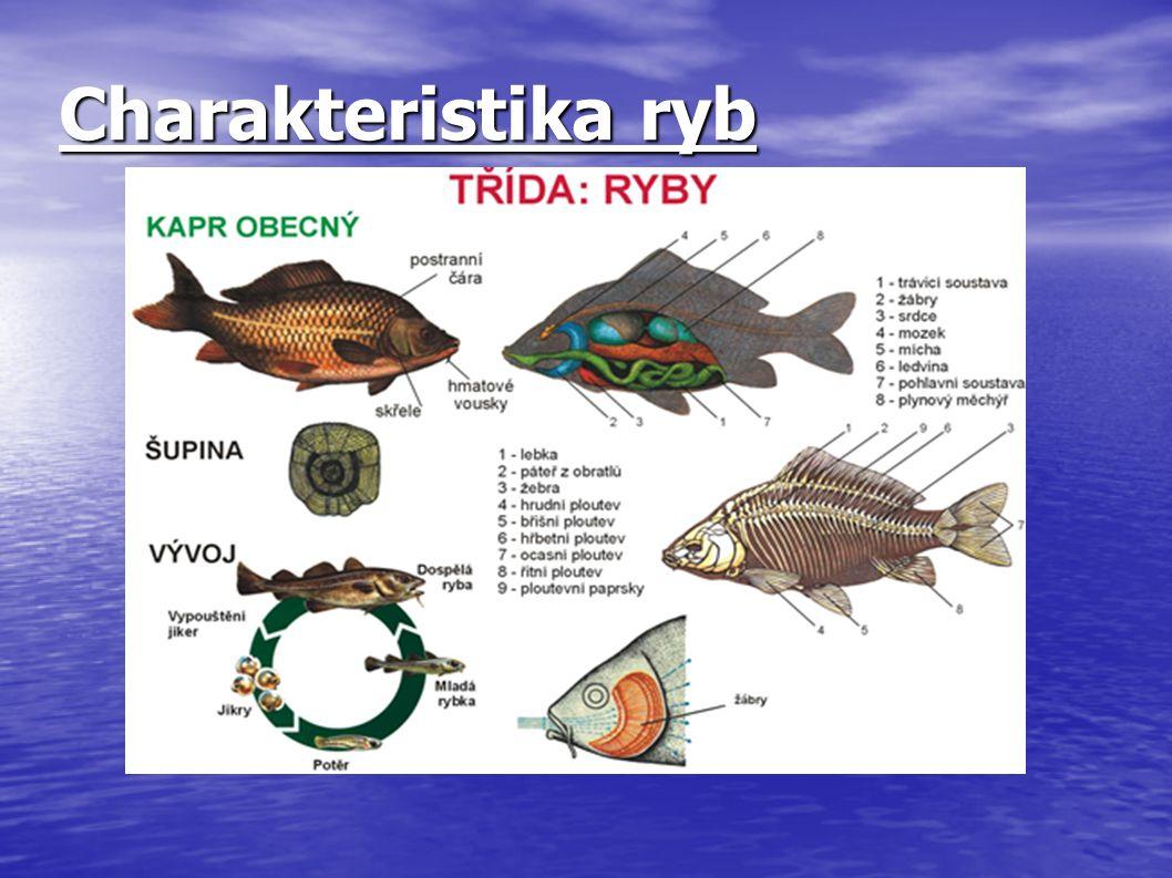 Charakteristika ryb