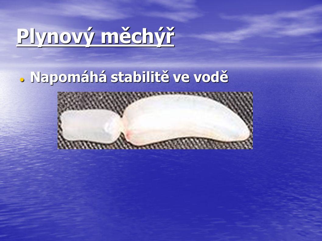 Plynový měchýř Napomáhá stabilitě ve vodě Napomáhá stabilitě ve vodě