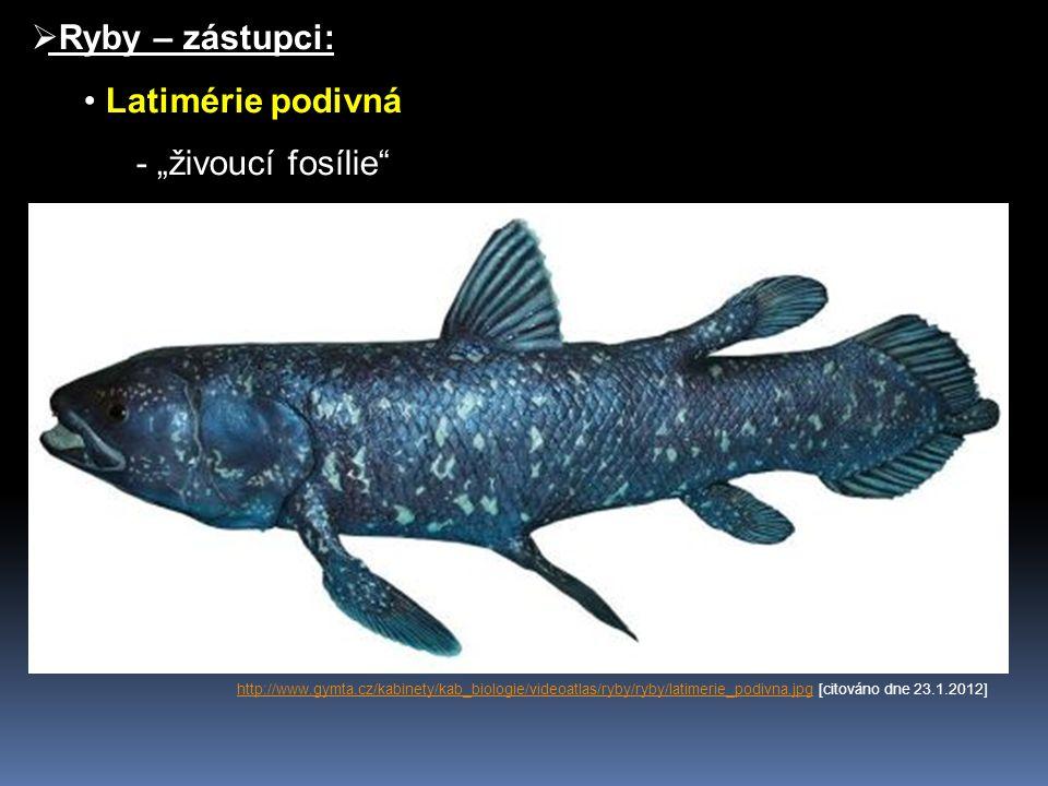 Ř Jeseteři - znaky paryb http://www.lastura.cz/obr_original/jeseter2.jpghttp://www.lastura.cz/obr_original/jeseter2.jpg [citováno dne 23.1.2012] http://www.aquapage.cz/Obrazky/Ryby/33167.jpghttp://www.aquapage.cz/Obrazky/Ryby/33167.jpg [citováno dne 23.1.2012] http://www.rybolov.com/administrace/obrazky/4927___9099.jpghttp://www.rybolov.com/administrace/obrazky/4927___9099.jpg [citováno dne 23.1.2012]