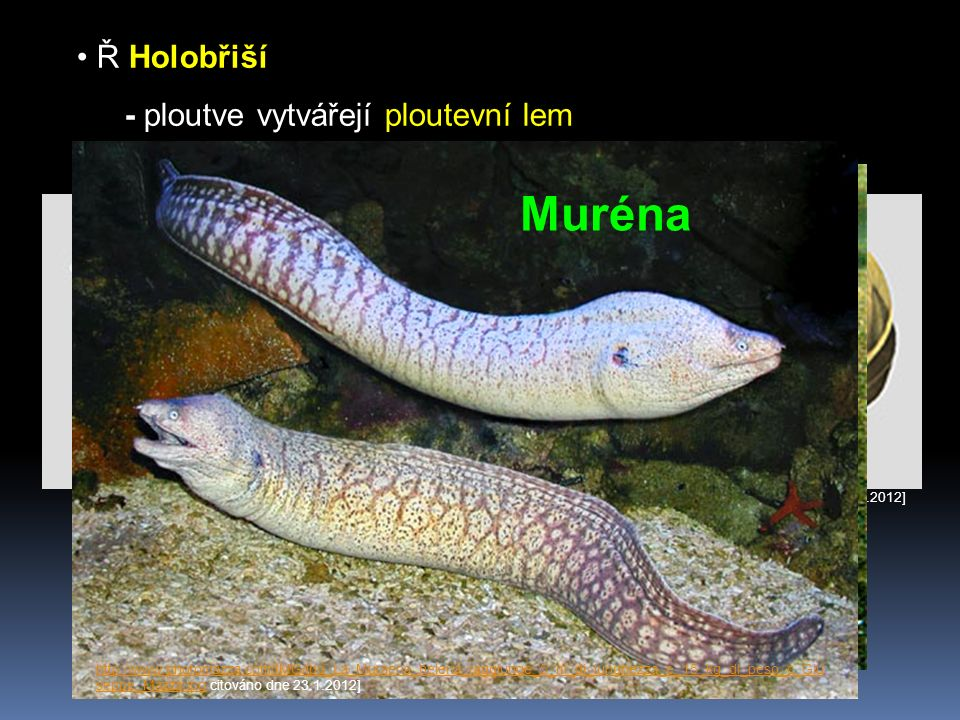 Ř Ostnoploutví - hřbetní ploutev velmi ostré paprsky Okoun http://www.rybareni.com/images/pousteni/okoun3.jpghttp://www.rybareni.com/images/pousteni/okoun3.jpg citováno dne 23.1.2012] Tuňák http://ec.europa.eu/fisheries/images/thunnus_thynnus.jpghttp://ec.europa.eu/fisheries/images/thunnus_thynnus.jpg [citováno dne 23.1.2012] Makrela http://www.biolib.cz/IMG/GAL/150809.jpghttp://www.biolib.cz/IMG/GAL/150809.jpg [citováno dne 23.1.2012] Mečoun http://www.globalfoodtrading.com/images/swordfish.jpghttp://www.globalfoodtrading.com/images/swordfish.jpg [citováno dne 23.1.2012]