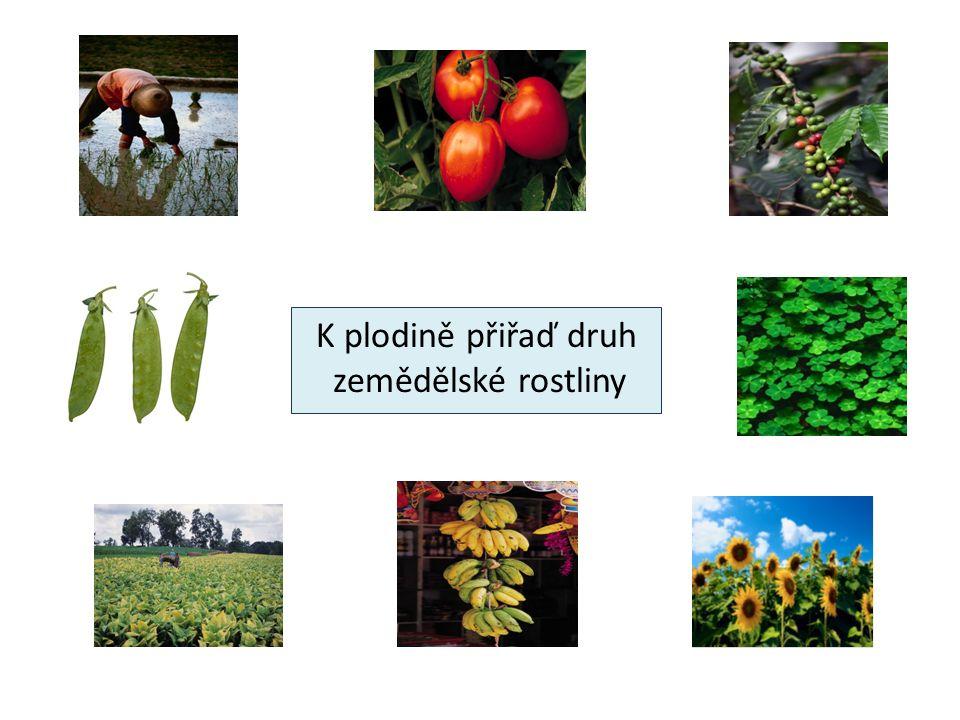 K plodině přiřaď druh zemědělské rostliny