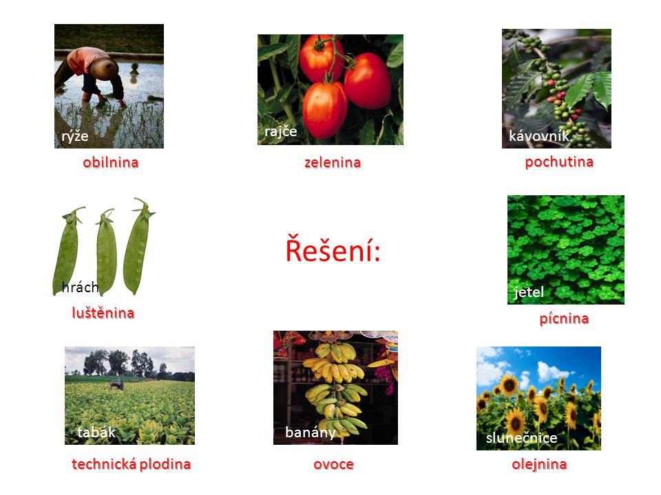Řešení: zelenina zelenina pochutina luštěnina ovoce olejnina technická plodina pícnina pícnina obilnina obilnina rýže rajče kávovník jetel slunečnice