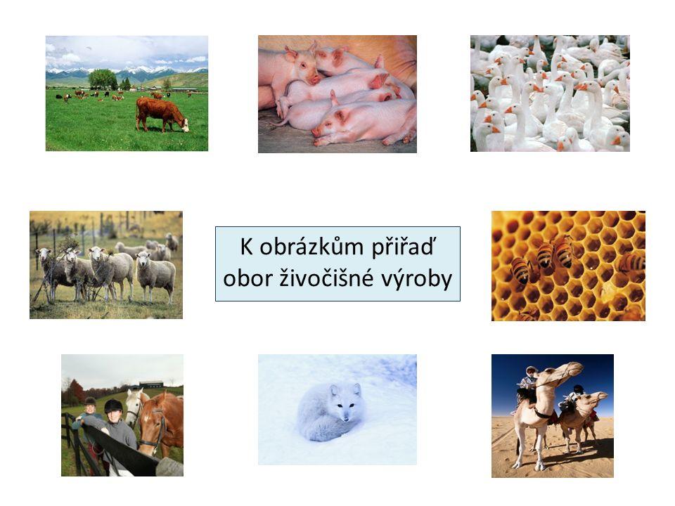 K obrázkům přiřaď obor živočišné výroby