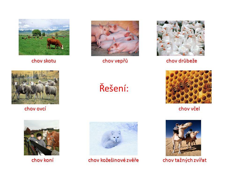 Řešení: chov skotu chov vepřů chov drůbeže chov ovcí chov včel chov koní chov kožešinové zvěře chov tažných zvířat