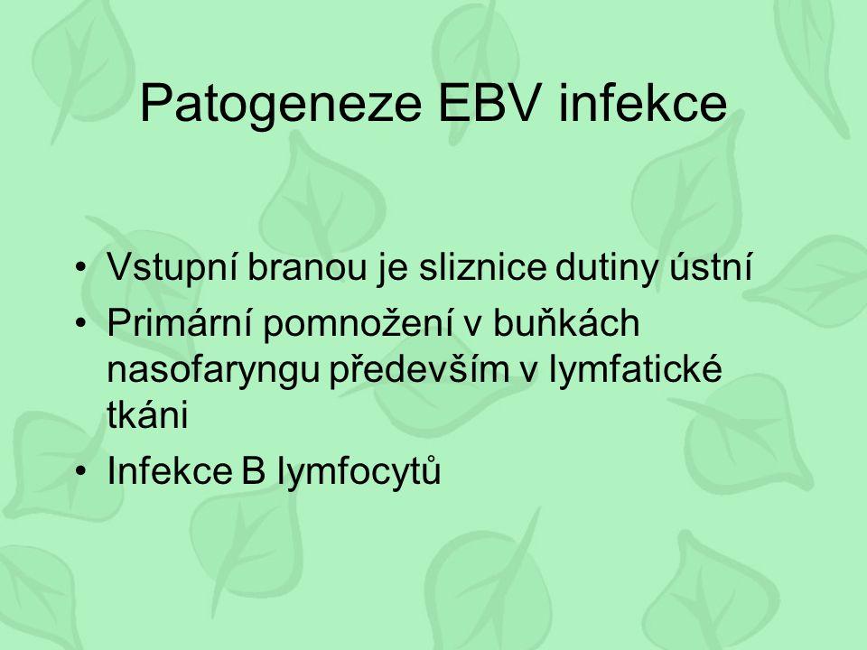 Patogeneze EBV infekce Vstupní branou je sliznice dutiny ústní Primární pomnožení v buňkách nasofaryngu především v lymfatické tkáni Infekce B lymfocytů