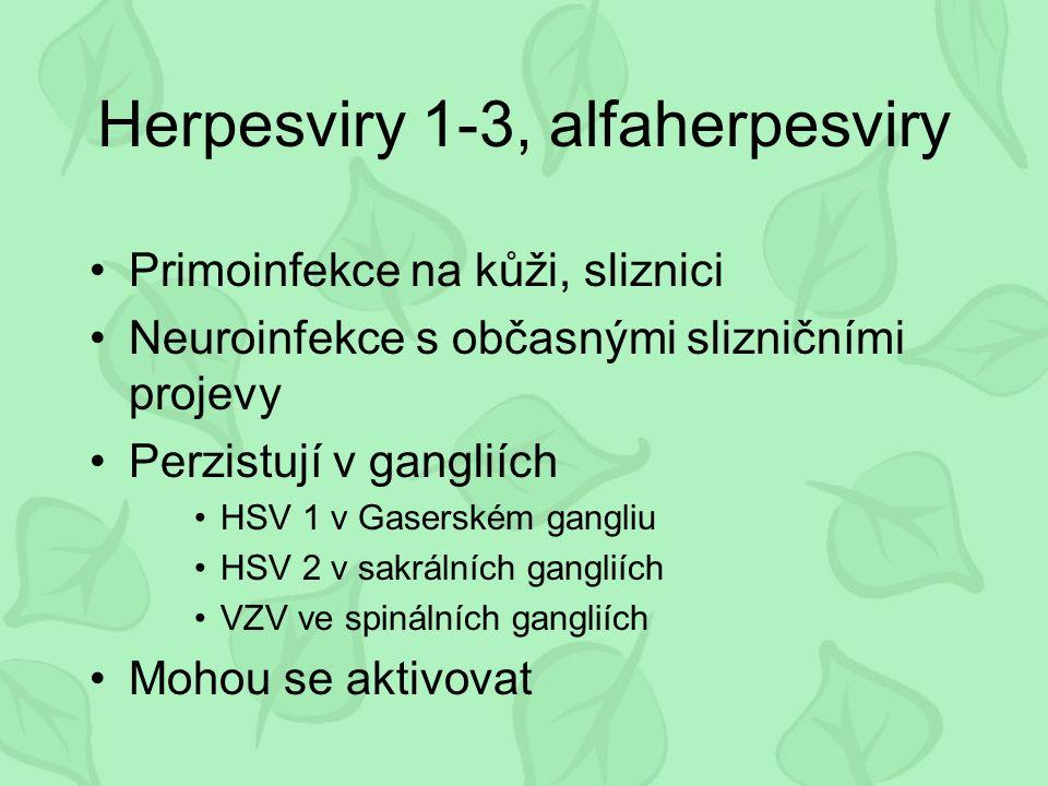 Herpesviry 1-3, alfaherpesviry Primoinfekce na kůži, sliznici Neuroinfekce s občasnými slizničními projevy Perzistují v gangliích HSV 1 v Gaserském gangliu HSV 2 v sakrálních gangliích VZV ve spinálních gangliích Mohou se aktivovat