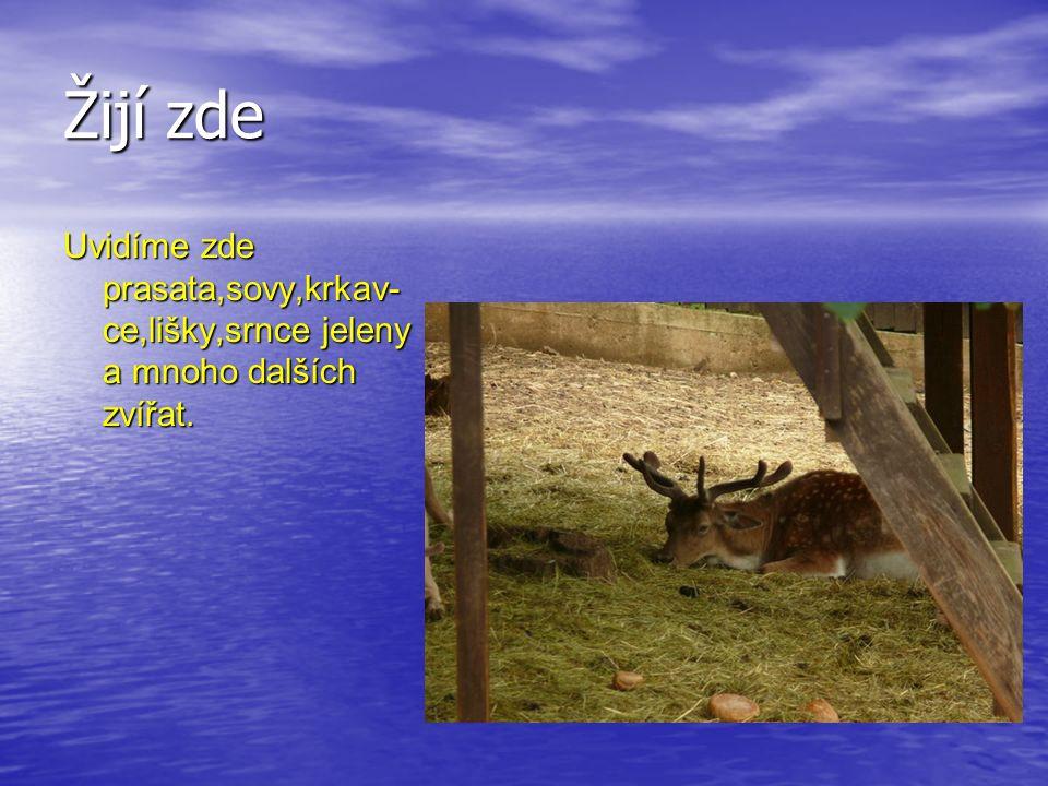 Žijí zde Uvidíme zde prasata,sovy,krkav- ce,lišky,srnce jeleny a mnoho dalších zvířat.