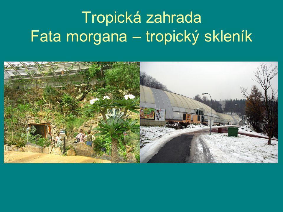 Tropická zahrada Fata morgana – tropický skleník