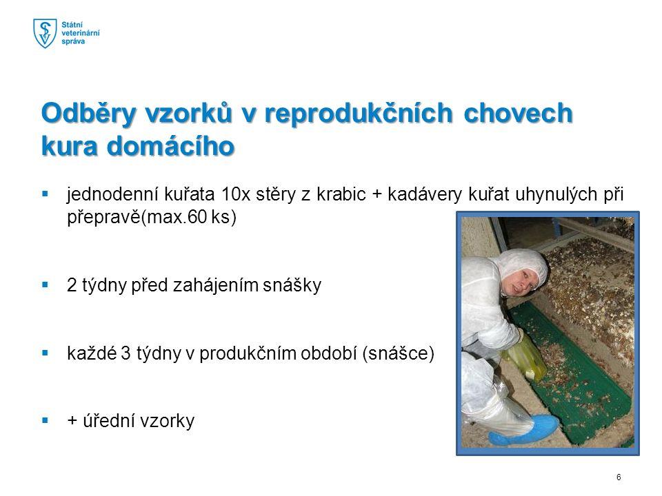  jednodenní kuřata 10x stěry z krabic + kadávery kuřat uhynulých při přepravě(max.60 ks)  2 týdny před zahájením snášky  každé 3 týdny v produkčním období (snášce)  + úřední vzorky Odběry vzorků v reprodukčních chovech kura domácího 6