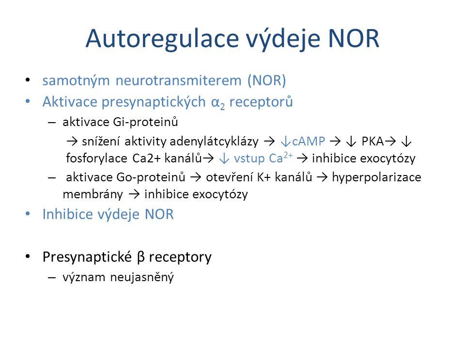 Autoregulace výdeje NOR samotným neurotransmiterem (NOR) Aktivace presynaptických α 2 receptorů – aktivace Gi-proteinů → snížení aktivity adenylátcykl