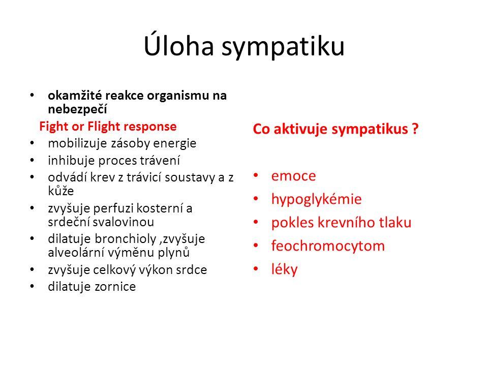 Úloha sympatiku okamžité reakce organismu na nebezpečí Fight or Flight response mobilizuje zásoby energie inhibuje proces trávení odvádí krev z trávic