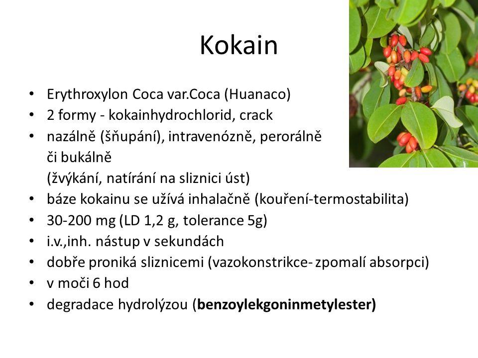Kokain Erythroxylon Coca var.Coca (Huanaco) 2 formy - kokainhydrochlorid, crack nazálně (šňupání), intravenózně, perorálně či bukálně (žvýkání, natírá