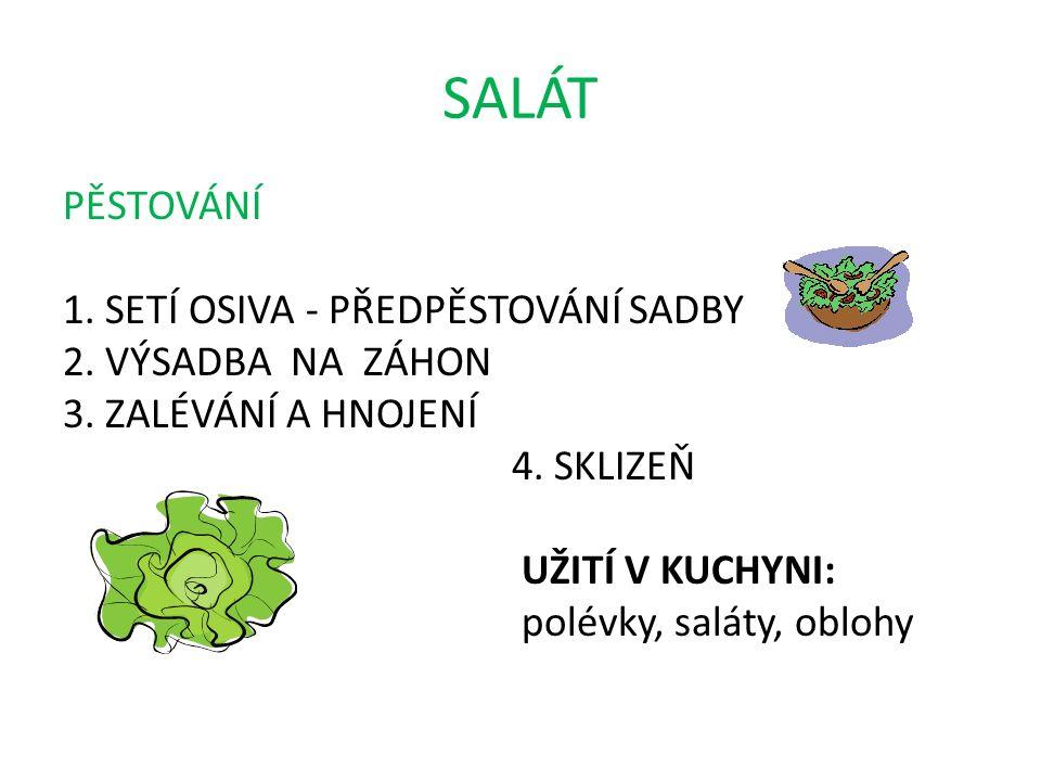 SALÁT PĚSTOVÁNÍ 1. SETÍ OSIVA - PŘEDPĚSTOVÁNÍ SADBY 2.