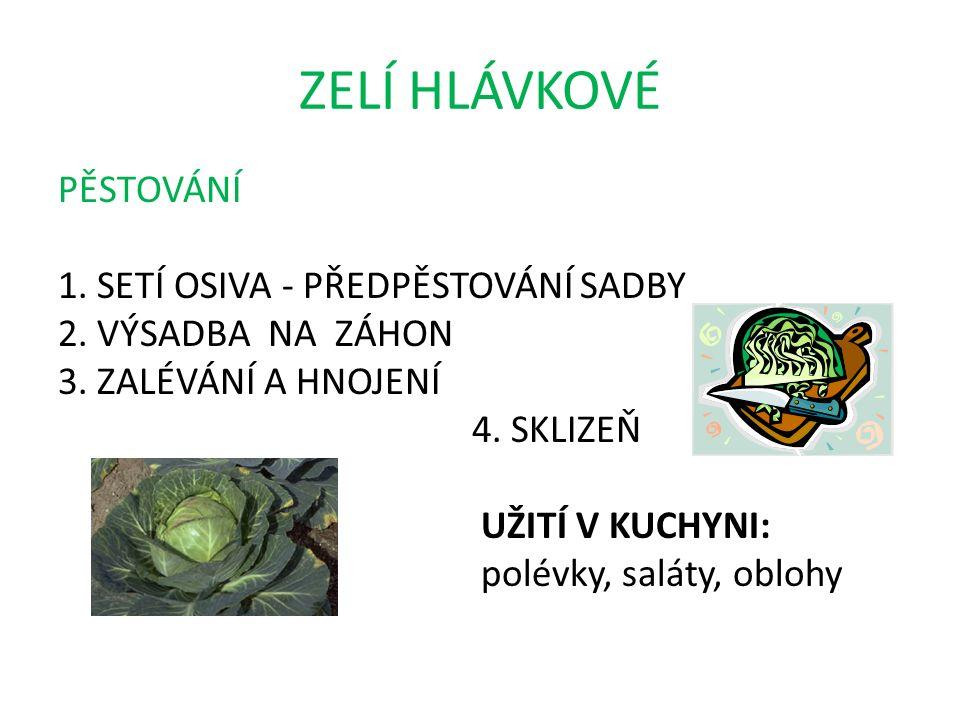 ZELÍ HLÁVKOVÉ PĚSTOVÁNÍ 1. SETÍ OSIVA - PŘEDPĚSTOVÁNÍ SADBY 2.