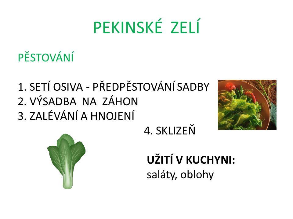 PEKINSKÉ ZELÍ PĚSTOVÁNÍ 1. SETÍ OSIVA - PŘEDPĚSTOVÁNÍ SADBY 2.