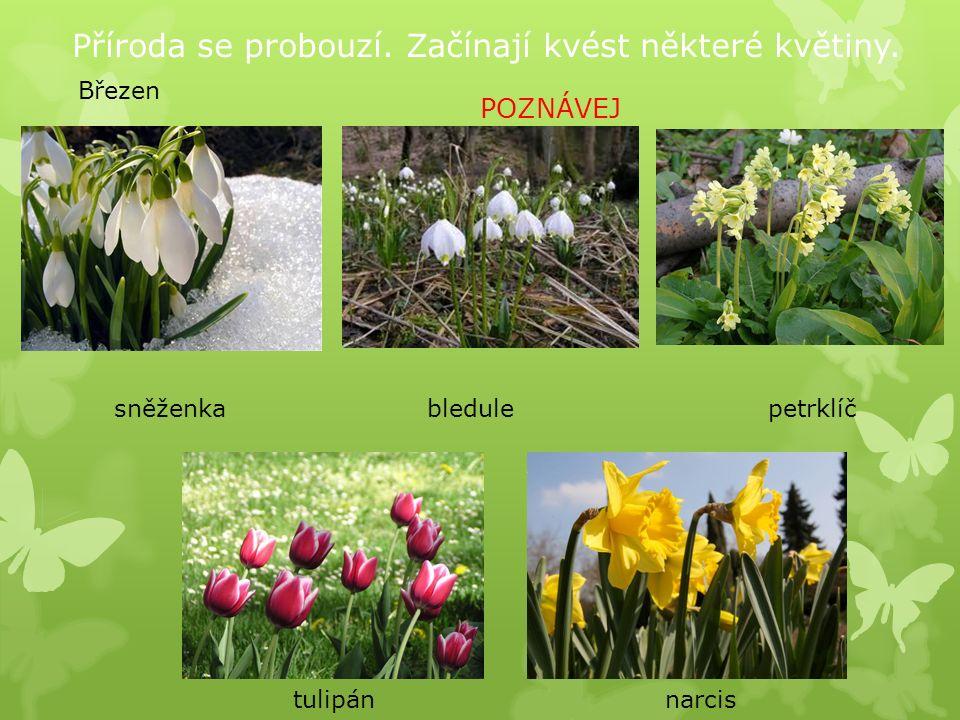 Příroda se probouzí.Začínají kvést některé květiny.