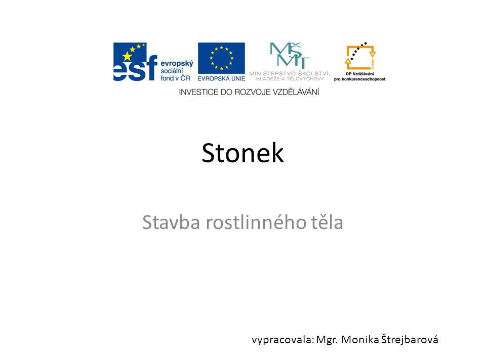 Stonek Stavba rostlinného těla vypracovala: Mgr. Monika Štrejbarová