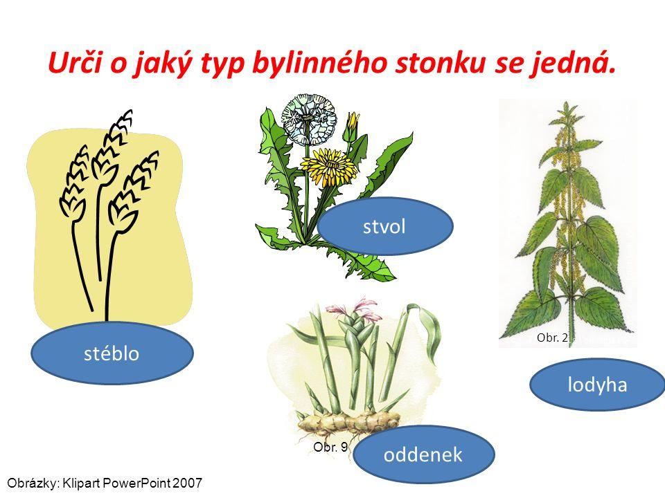 Urči o jaký typ bylinného stonku se jedná. Obr. 2 stéblo stvol lodyha Obr.