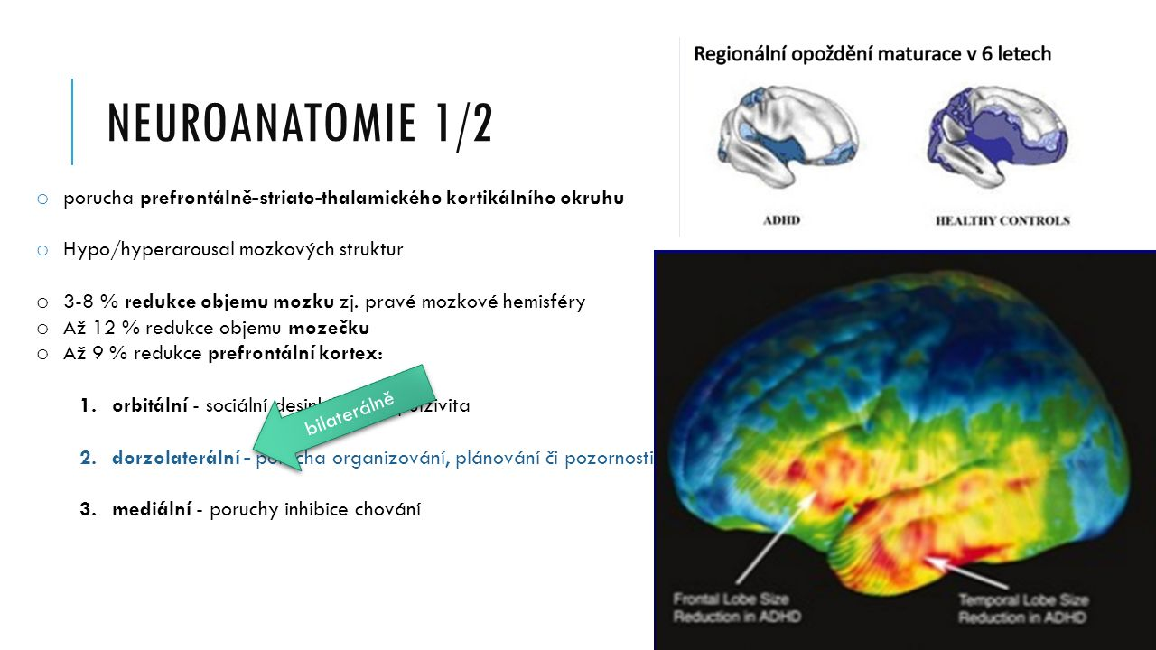 NEUROANATOMIE 1/2 o porucha prefrontálně-striato-thalamického kortikálního okruhu o Hypo/hyperarousal mozkových struktur o 3-8 % redukce objemu mozku zj.