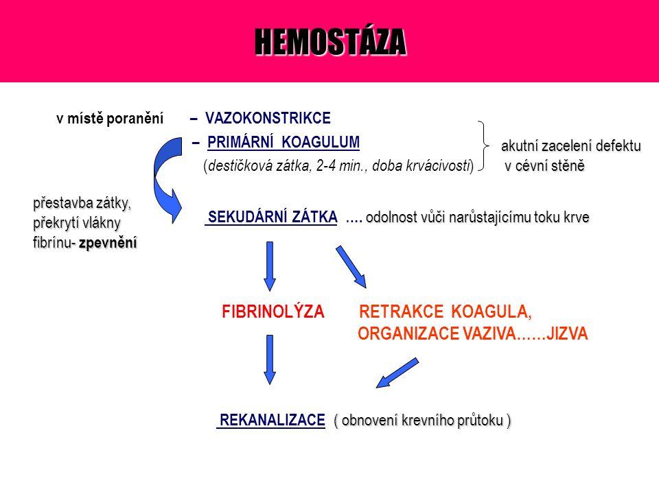 HEMOSTÁZA v místě poranění – VAZOKONSTRIKCE – PRIMÁRNÍ KOAGULUM ( destičková zátka, 2-4 min., doba krvácivosti ) akutní zacelení defektu v cévní stěně