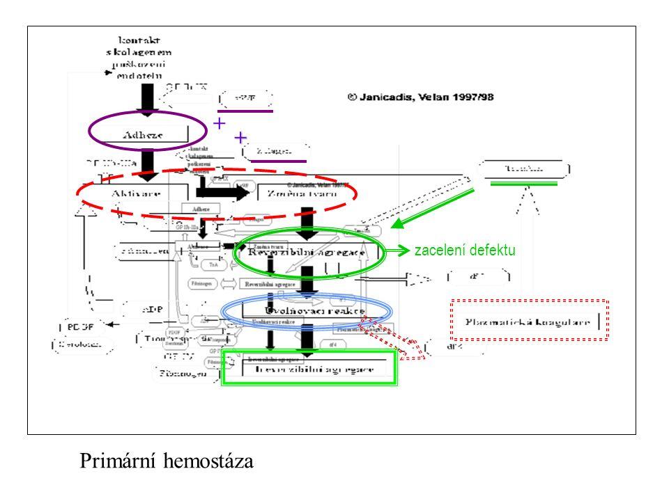 zacelení defektu + + Primární hemostáza