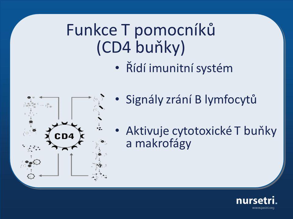 Funkce T pomocníků (CD4 buňky) Řídí imunitní systém Signály zrání B lymfocytů Aktivuje cytotoxické T buňky a makrofágy
