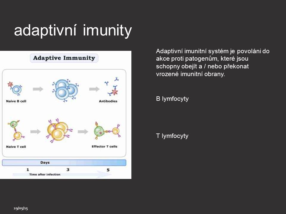 lymfocyty Typ Leukocyte (bílé krvinky) Obsahují B buňky a T buňky kromě Přírodních zabijáků buněk Část imunitního systému Adaptive