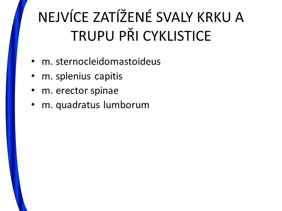 NEJVÍCE ZATÍŽENÉ SVALY KRKU A TRUPU PŘI CYKLISTICE m. sternocleidomastoideus m. splenius capitis m. erector spinae m. quadratus lumborum