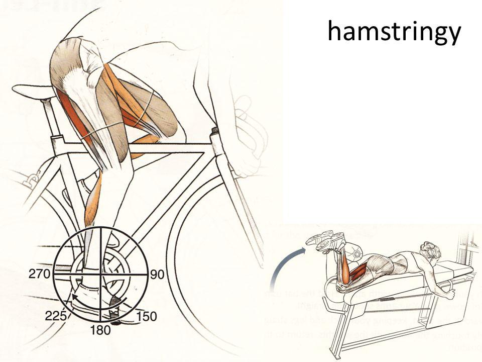 hamstringy