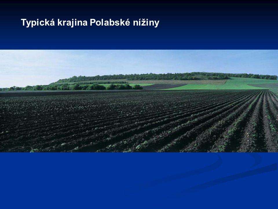 Typická krajina Polabské nížiny