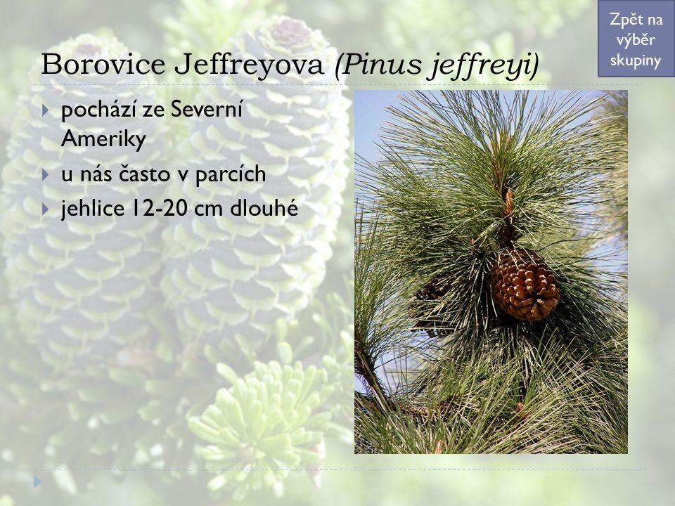 Borovice Jeffreyova (Pinus jeffreyi)  pochází ze Severní Ameriky  u nás často v parcích  jehlice 12-20 cm dlouhé Zpět na výběr skupiny