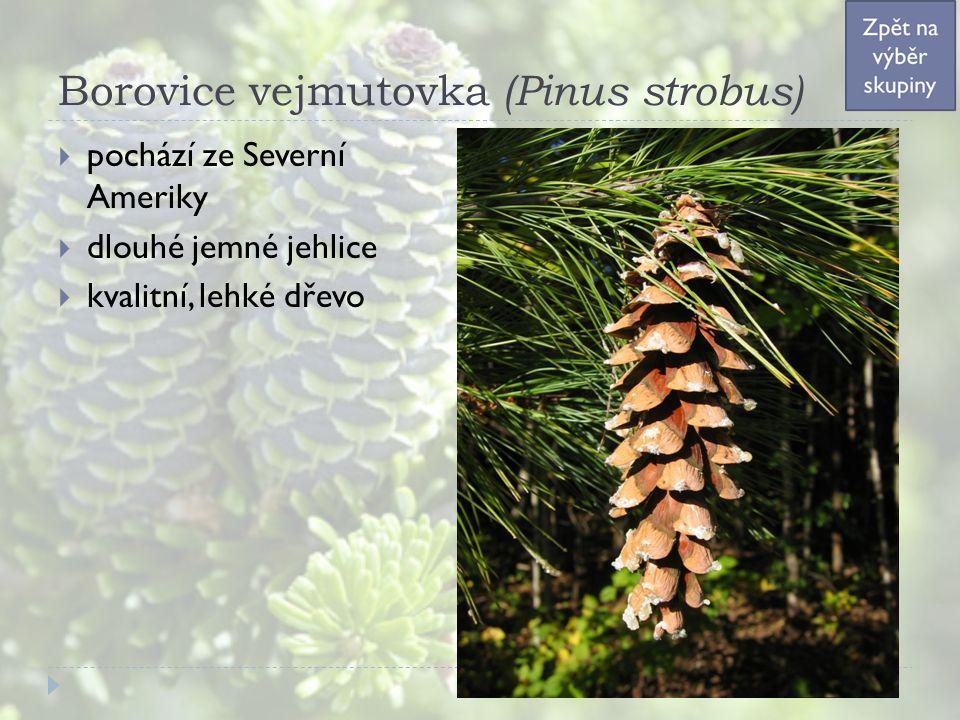 Borovice vejmutovka (Pinus strobus)  pochází ze Severní Ameriky  dlouhé jemné jehlice  kvalitní, lehké dřevo