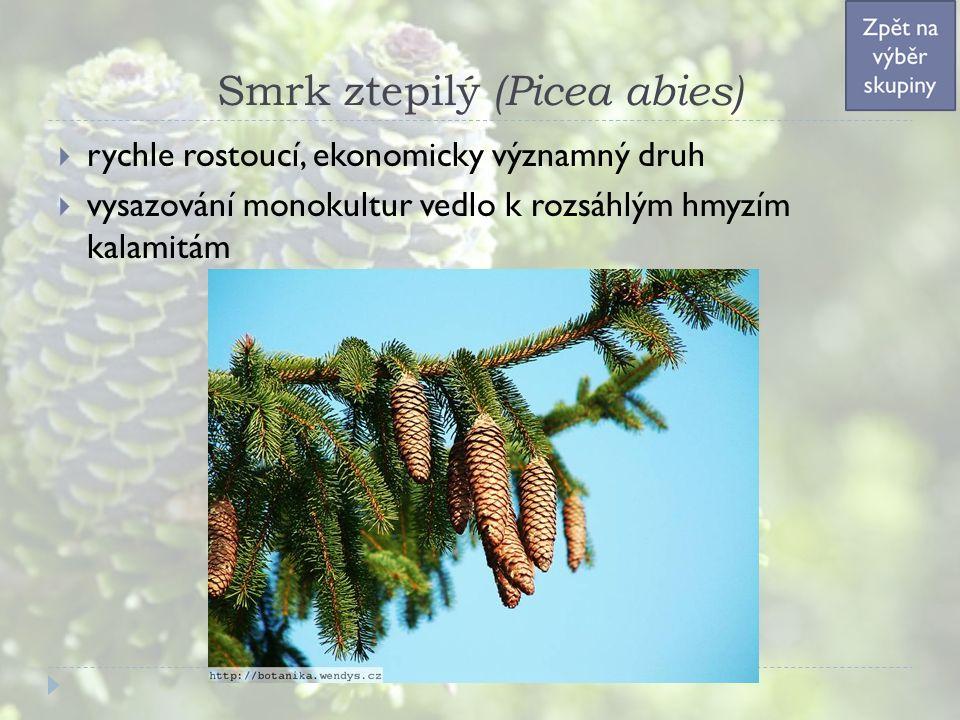 Smrk ztepilý (Picea abies)  rychle rostoucí, ekonomicky významný druh  vysazování monokultur vedlo k rozsáhlým hmyzím kalamitám