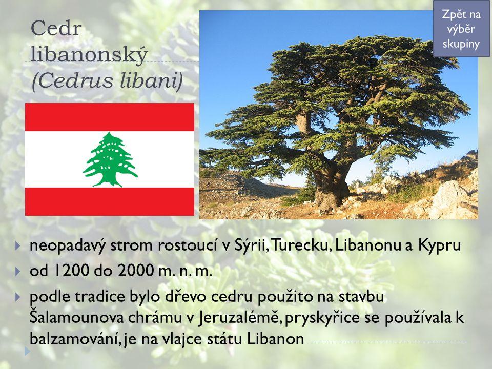 Cedr libanonský (Cedrus libani)  neopadavý strom rostoucí v Sýrii, Turecku, Libanonu a Kypru  od 1200 do 2000 m. n. m.  podle tradice bylo dřevo ce