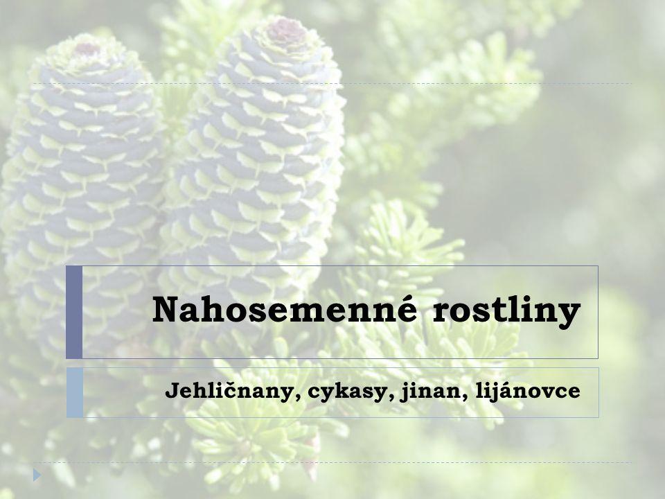 Nahosemenné rostliny Jehličnany, cykasy, jinan, lijánovce