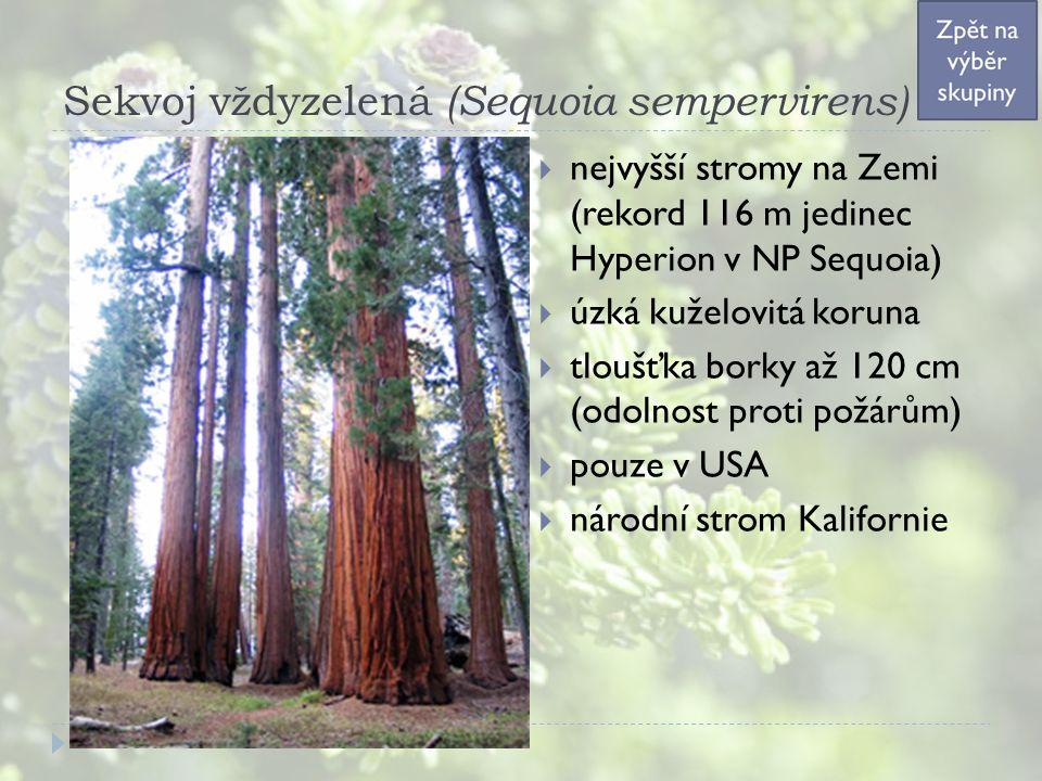 Sekvoj vždyzelená (Sequoia sempervirens)  nejvyšší stromy na Zemi (rekord 116 m jedinec Hyperion v NP Sequoia)  úzká kuželovitá koruna  tloušťka borky až 120 cm (odolnost proti požárům)  pouze v USA  národní strom Kalifornie