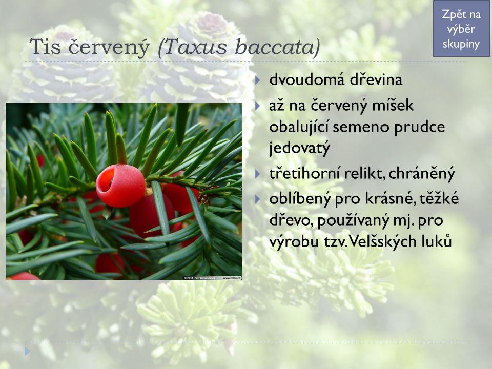 Tis červený (Taxus baccata)  dvoudomá dřevina  až na červený míšek obalující semeno prudce jedovatý  třetihorní relikt, chráněný  oblíbený pro krásné, těžké dřevo, používaný mj.