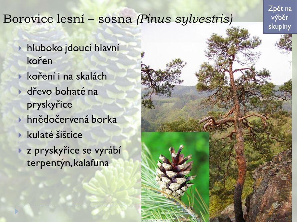 Borovice lesní – sosna (Pinus sylvestris)  hluboko jdoucí hlavní kořen  koření i na skalách  dřevo bohaté na pryskyřice  hnědočervená borka  kulaté šištice  z pryskyřice se vyrábí terpentýn, kalafuna Zpět na výběr skupiny
